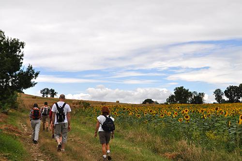 Randonnée autour de Sainte Croix entre vgnes et champs de tournesol